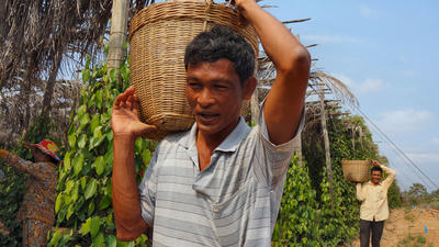 Farmlink Ltd. | Kampot Pepper Artisan since 2006 – Fair Trade partner and exporter