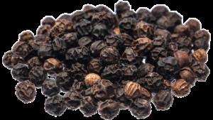 Schwarzer Pfeffer (Piper nigrum)